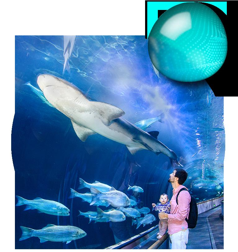 Explore Aquarium Of The Bay Attractions Aquarium Of The Bay