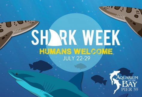 Shark Week at Aquarium of the Bay