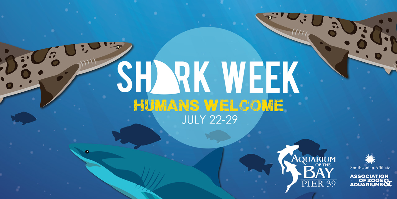 Shark Week at Aquarium of the Bay