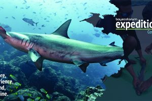 BayEcotarium Expeditions