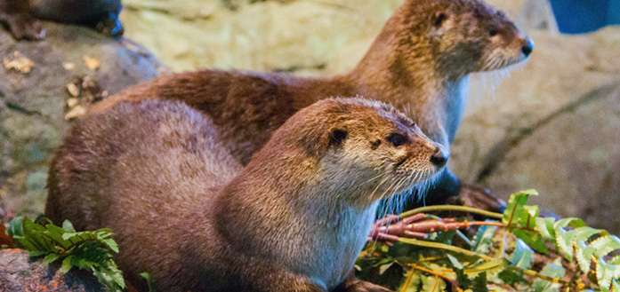 River Otters: Watershed Ambassadors