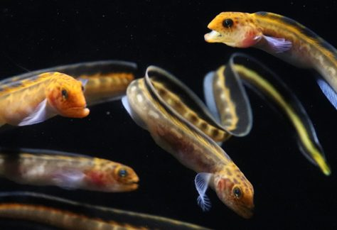 Aquarium of the Bay | Explore, Engage, Experience | San Francisco